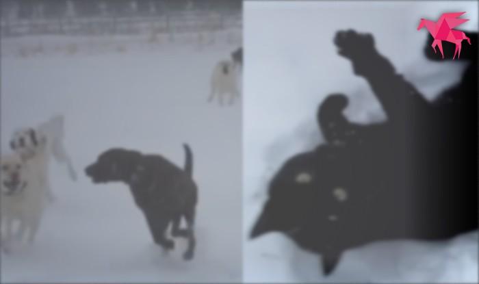 犬+雪=無限の楽しみ ネコが楽しんでいるところは見てないな~