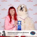 Fluffy Giant Slovakischer Puppy Champion  Die österreichische Pyrenäen Berghund Zuchtstätte