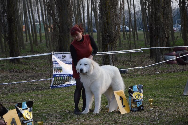 Fluffy Giant Welpen 2018/2019  Die österreichische Pyrenäen Berghund Zuchtstätte