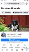 Hunters Hounds