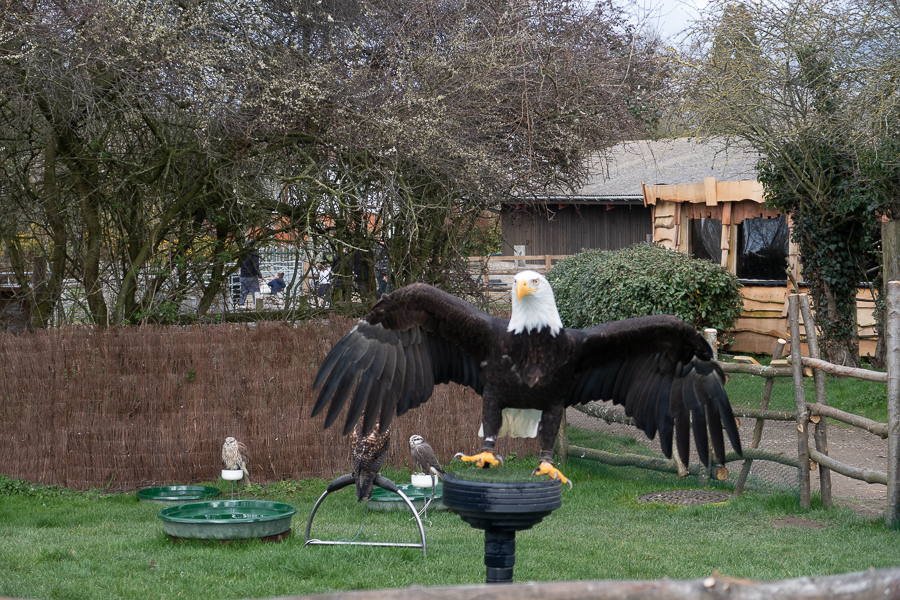 Hobbledown Farm Birds of Prey
