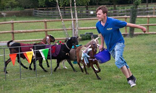Mudchute Goat Race