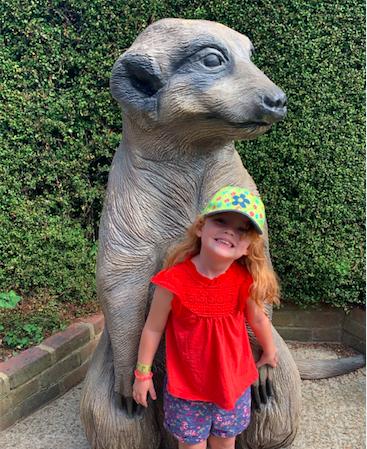 Drusillas zoo meerkat