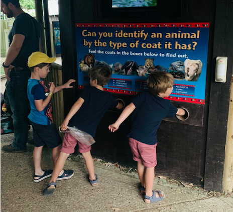 Drusillas zoo