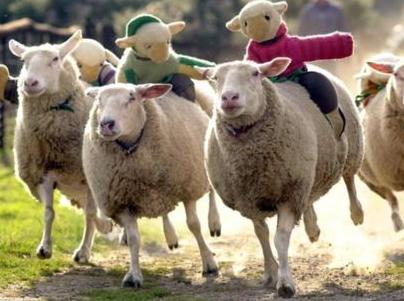The Big Sheep_wiki