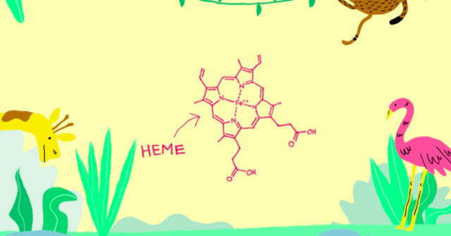 Cartoon science Heme molecule on yellow background with plants and animals