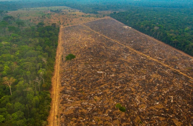 Aerial photograph of land deforested for agriculture