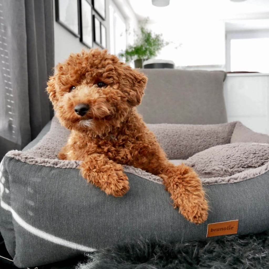 BL Dogbeds SP Img 03 1500x1468