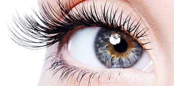 Das-menschliche-Auge