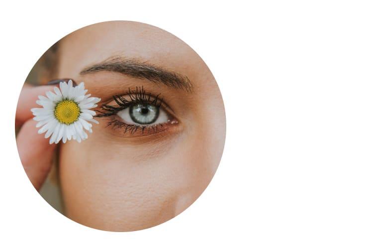 RoteAugen Auge Gaensebluemchen