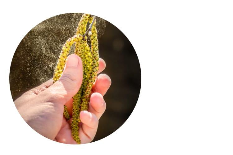 RoteAugen Pollenflug