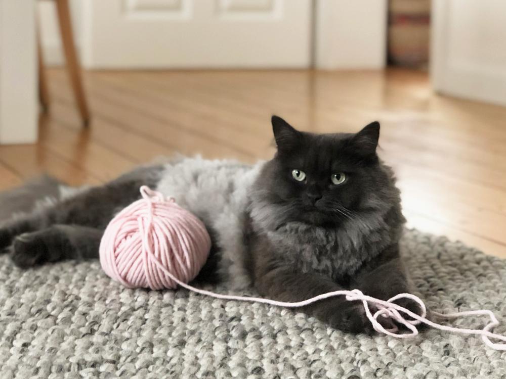Prym 404 Katze Faden