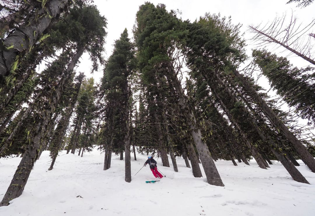 Go to Red Mountain for $10 cat skiing, a barrel-shaped sauna and zero crowds