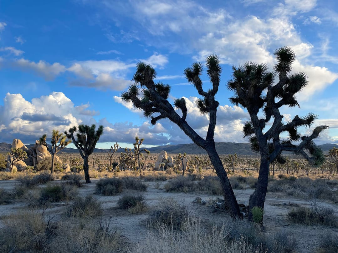 California escape: Peace, harmony and inspiration in Joshua Tree and Palm Springs