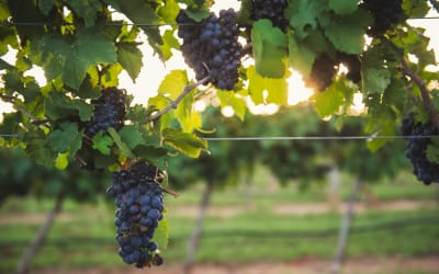 Four Fredericksburg Wineries to visit this Fall