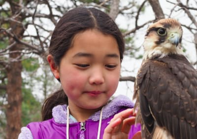 Diving into the history of falconry at The Broadmoor