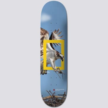 Element Skateboards X Nat Geo Team 'Osprey' Skateboard Deck 8.25