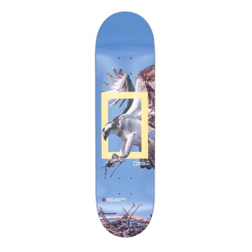 Element Nat Geo Osprey Deck - 8.25""