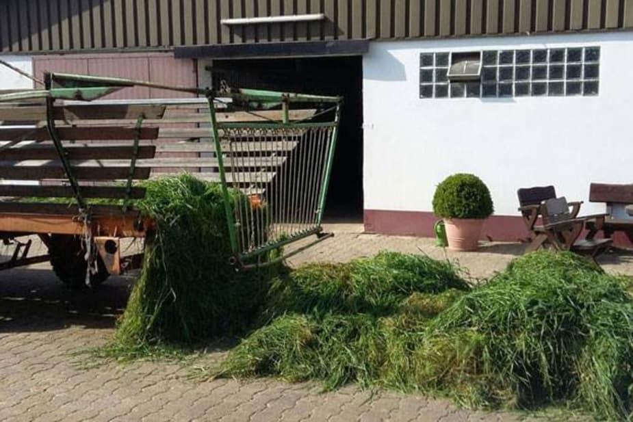 Frisch geschnittenes Gras für die Pferde