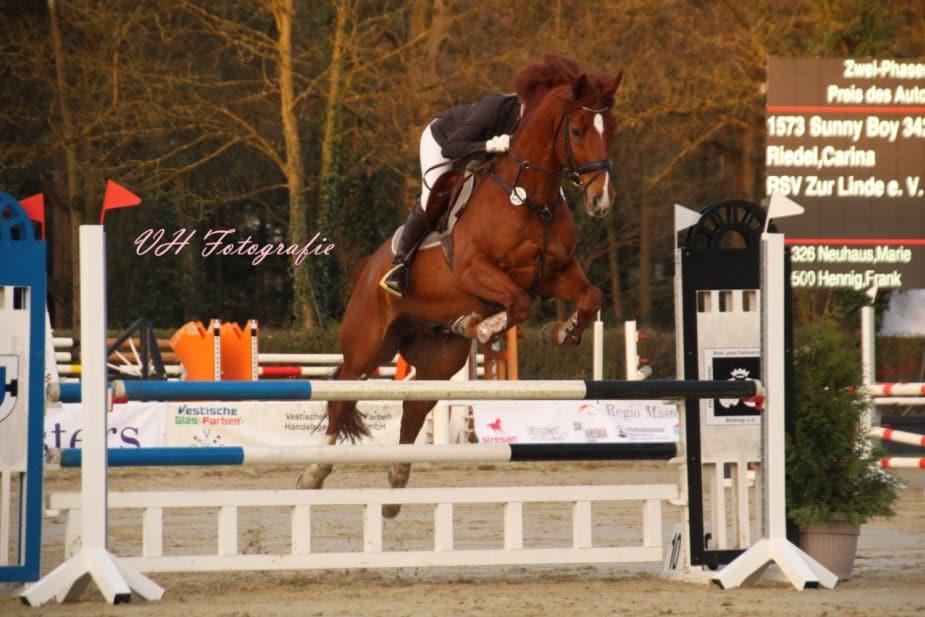 Springen: Carina Riedel mit Sunny Boy