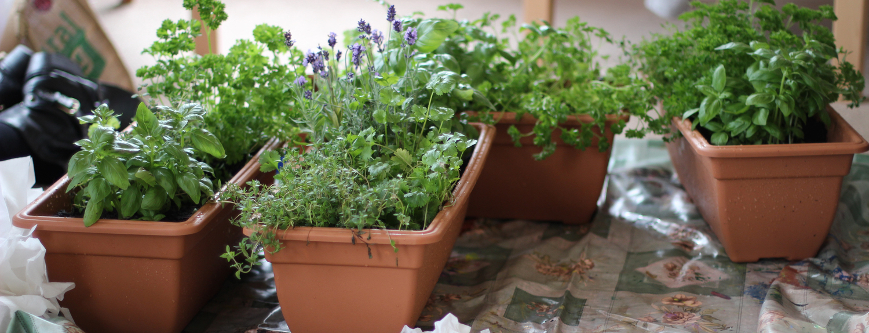 Rootless Garden