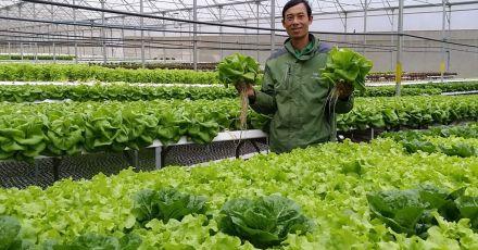 Hướng dẫn trồng rau sạch bằng phương pháp thủy canh tại nhà