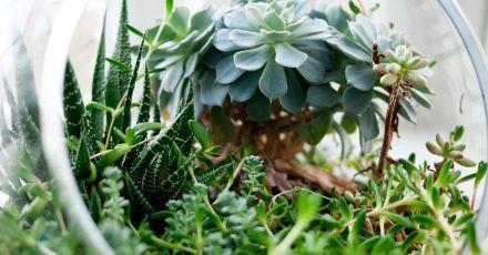15 khu vườn nhỏ cực đẹp để bạn trồng cây và hoa