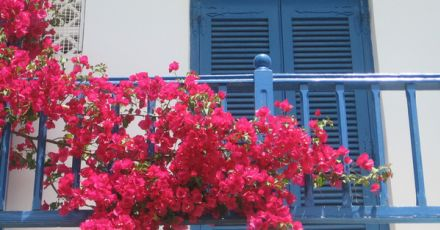 Cách trang trí hoa ở ban công với 5 loại hoa đáng để học hỏi