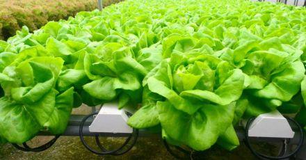 Hướng dẫn cách trồng rau sạch tại nhà với 3 cách siêu dễ làm