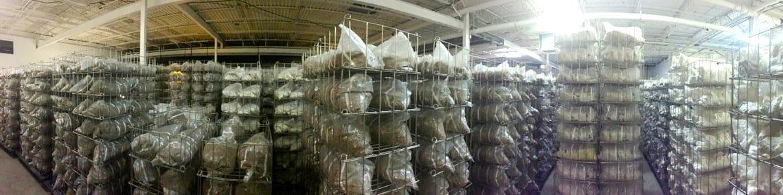 Mushroom Spawn Grow Bags