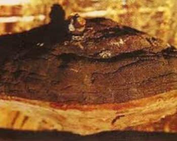 Phellinus linteus AM-M220