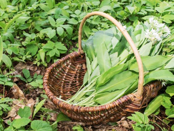 Team-Building-decouvertes-de-plantes-et-fleurs-comestibles-pour-entreprise-a-paris