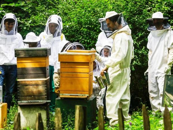team-building-atelier-apiculture-pour-entreprise-a-paris