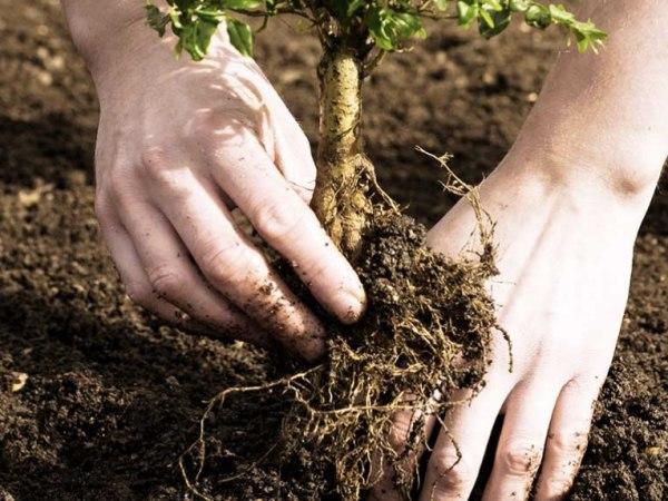 team-building-Team-Building-planter-des-arbres-dans-une-foret-en-equipe