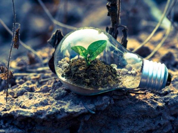 team-building-Team-building-defi-sur-des-pratiques-eco-responsable-en-ligne