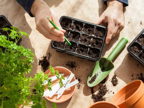 team-building-Team-building-atelier-de-jardinage-avec-zero-dechet-en-visioconference