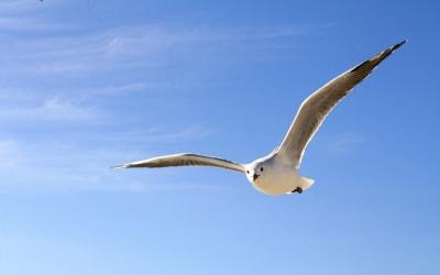 展翅想高飛,你得不怕寂寞