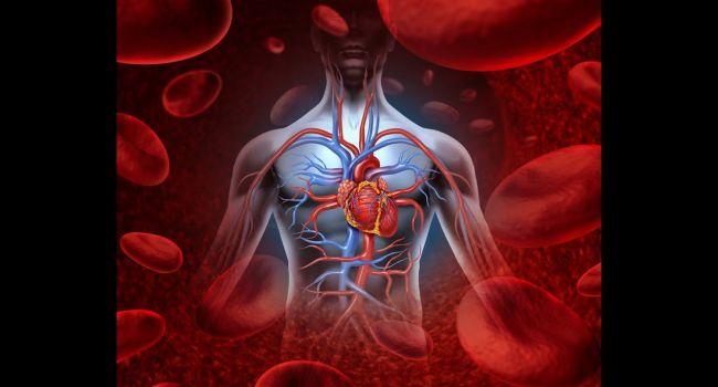Стали відомі продукти, що поліпшують циркуляцію крові