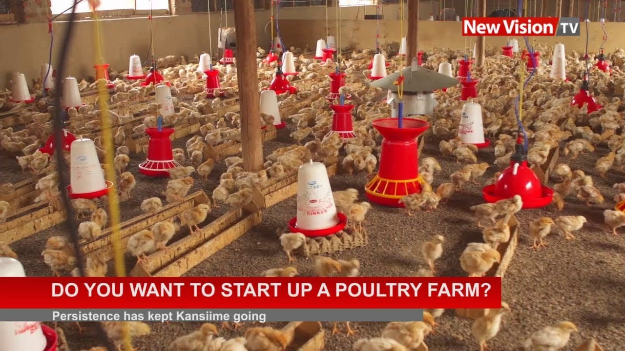 Do you want to start up a poultry farm ?