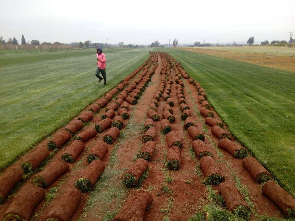 PROLAWNS MOYO Land preparation