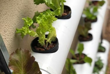 HYDROPONICS : An exciting view for a green thumb