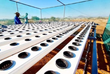 The Future of Hydroponics