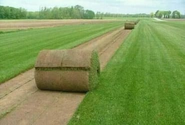 Rollon Grass Supply and Laying . Get Online Quote Now !