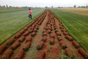 PROLAWNS MOYO Land preparation