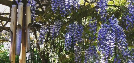 Introducing our pretty Shropshire Garden