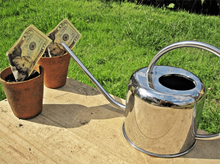 Watering money growing