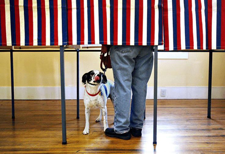dog polling station