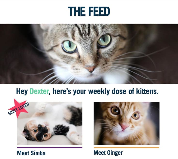The feed kittens