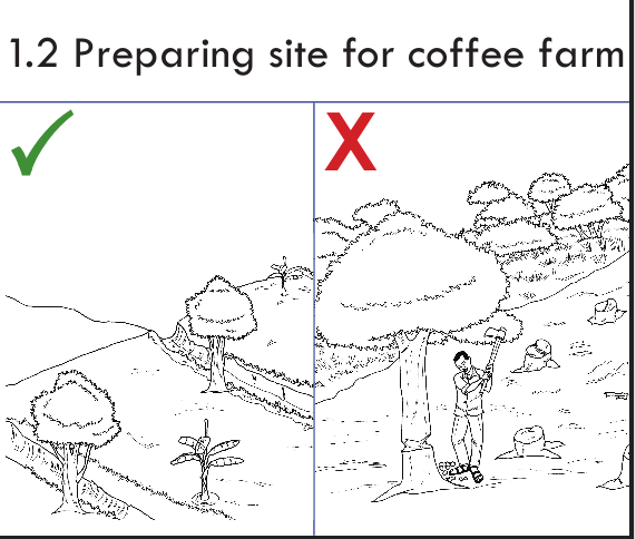Preparing site for coffee site