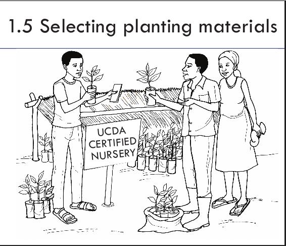 Selecting planting materials